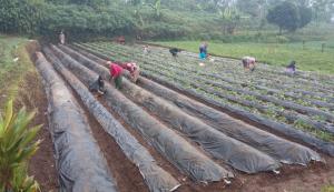 Di Tengah Wabah Corona, Yuk Penuhi Kebutuhan dari Produk Desa