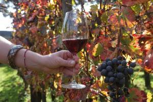 Uomo e 50enne, ecco identikit dell'acquirente di vino online - Terra&Gusto
