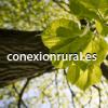ConexionRural